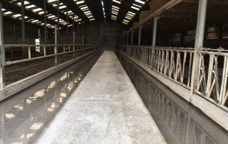 Duurzame coatingvloeren voor rundveebedrijven